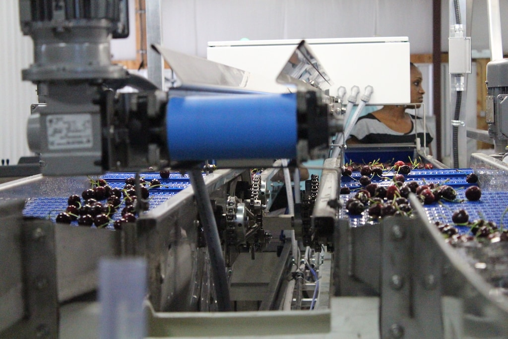 Waycon Manufacturing Ltd. Design and Manufacturing Fruit Packing Lines